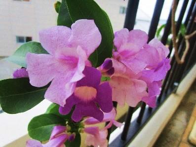 ポート・ヒロックの花